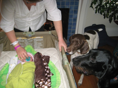 Baxter and Robah meet/sniff Jackie.